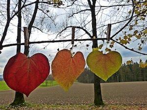 Leaves 1849820_640