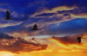 Migratory Birds 3379564_640