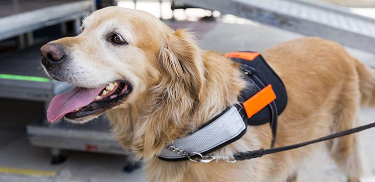 Service Dog Promo