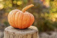 Pumpkin 4454745_1280